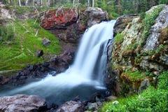 faller älgnationalparken yellowstone Royaltyfri Fotografi