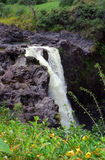 faller den hawaii regnbågen Arkivfoto