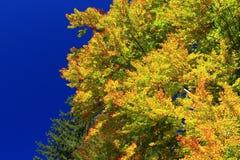 faller ljusa färger för abstrakt höst halvt för trevlig modell för leaves rött Fotografering för Bildbyråer