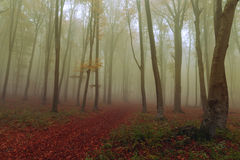 faller ljusa färger för abstrakt höst halvt för trevlig modell för leaves rött Royaltyfri Fotografi