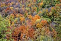 faller ljusa färger för abstrakt höst halvt för trevlig modell för leaves rött Arkivfoto
