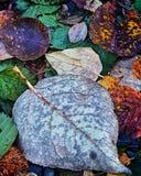 faller ljusa färger för abstrakt höst halvt för trevlig modell för leaves rött Royaltyfria Foton
