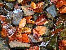faller ljusa färger för abstrakt höst halvt för trevlig modell för leaves rött Detalj av ruttna gamla sidor på basaltgrus i spege Royaltyfria Bilder