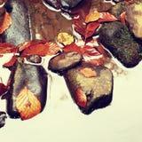 faller ljusa färger för abstrakt höst halvt för trevlig modell för leaves rött Detalj av ruttna gamla sidor på basaltgrus i spege Arkivfoto
