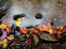 faller ljusa färger för abstrakt höst halvt för trevlig modell för leaves rött Detalj av ruttna gamla sidor på basaltgrus i spege Fotografering för Bildbyråer
