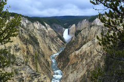 faller yellowstone royaltyfri foto
