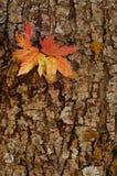 Fallfärg Arkivfoto