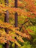 Fallfärger Royaltyfria Foton