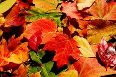 Fallfarbe Stockfoto