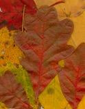 Fallfarbe Lizenzfreies Stockfoto