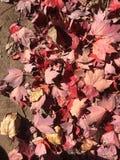 Fallfarbe Stockbild