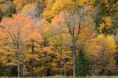 Fallfarbe im Lake Placid NY Stockbild