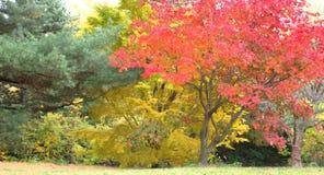 Fallfarben auf Bäumen in einem Park Lizenzfreie Stockfotografie