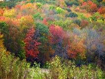Fallfarben auf Bäumen in Wisconsin Lizenzfreies Stockfoto
