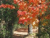 Fallfarben auf Spur durch Wald Stockbild