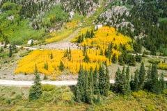 Fallfarben in Colorado Stockbild