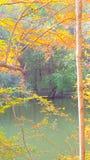 Fallfarben durch Wasser Lizenzfreie Stockfotografie