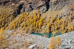 Fallfarben im hohen Berg Alpiner See mit gelben Lärchenbäumen Ayas-Tal, Aosta Italien Lizenzfreies Stockfoto