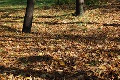 Fallfarben am Park stockfotos