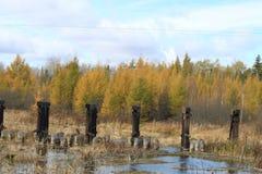 Fallfarben werden in einem Fluss in Wisconsin reflektiert Stockfotografie