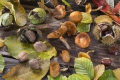 Fallfrucht auf Holz Lizenzfreies Stockfoto