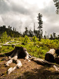 Fallfrukt i skog efter storm royaltyfri fotografi