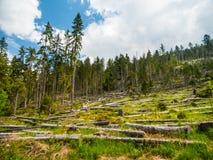 Fallfrukt i skog efter storm royaltyfri foto