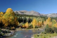 fallglaciärlinje flodtrees för berg n p Arkivfoton