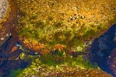 Fallgropar och skal som täckas med alger, små skal Royaltyfria Bilder
