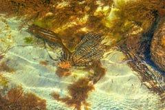Fallgropar och skal som täckas med alger, små skal i det rena havet Arkivfoton