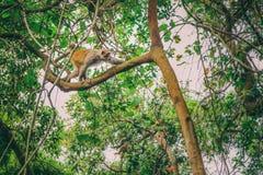Fallhammer auf Baum Lizenzfreie Stockfotografie