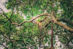 Fallhammer auf Baum Lizenzfreie Stockbilder