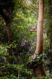 Fallhammer auf Baum Stockfotos