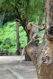 Fallhammer auf dem Baum Lizenzfreie Stockfotos