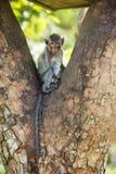 Fallhammer auf einem Baum Stockfotografie