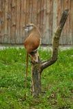 Fallhammer, der auf Baum sitzt Lizenzfreie Stockfotos