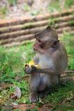 Fallhammer, der eine Banane isst Lizenzfreies Stockfoto