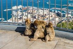 Fallhammer in Gibraltar Lizenzfreie Stockfotografie