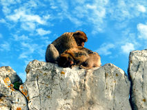 Fallhammer in Gibraltar Lizenzfreies Stockfoto