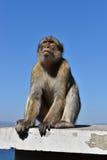 Fallhammer in Gibraltar Lizenzfreies Stockbild