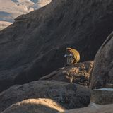 Fallhammer im Berg Stockbild