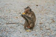Fallhammer isst Banane Lizenzfreie Stockbilder