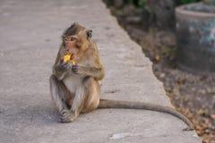 Fallhammer isst Banane Lizenzfreies Stockbild