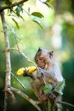 Fallhammer mit Banane Lizenzfreie Stockfotografie