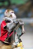 Fallhammerradfahren des Zirkuses Stockfoto