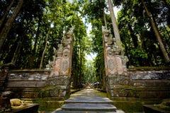 Fallhammerwald in Bali (Sangeh) Stockbild