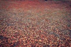 Fallherbstlaub mit den verschiedenen Farben gefallen zu Boden in einem Wald Lizenzfreie Stockfotos