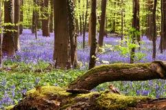 Fallin in blauw Royalty-vrije Stock Foto's