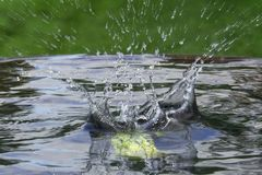 Falling apple in water with a splash stock photo