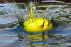 Falling apple in water with a splash stock image